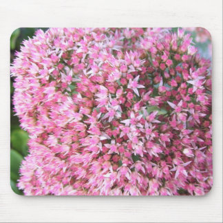 Mouse Pad - Showy Stonecrop