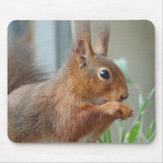 Mouse PAD squirrel Squirrel Écureuil