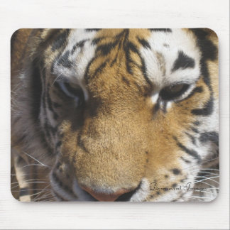 mouse pad tiger Dominant Images