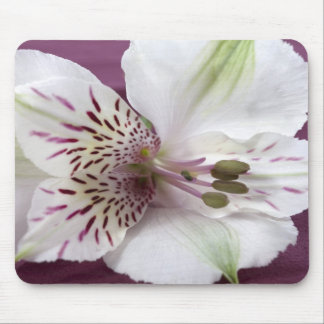 Mouse Pad  -  White Lily