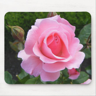 Mouse pad with beautiful pink rose