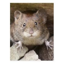 Mouse Portrait Postcard