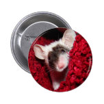 Mouse - Zorro Button