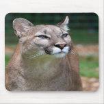 Mousemat hermoso de la foto del puma, mousepad tapetes de raton