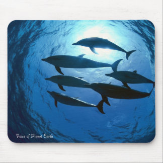 Mousepad 14 - Dolphins