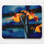 Mousepad anaranjado de los Daylilies Tapetes De Ratones