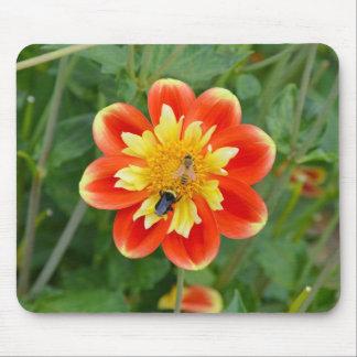 Mousepad anaranjado y amarillo de la flor de la