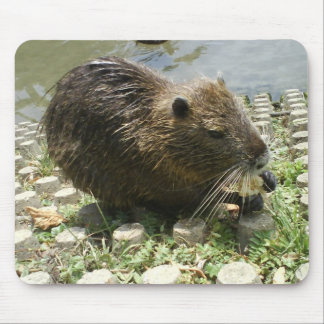 MOUSEPAD ANIMAL RAT NUTRIA