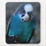 mousepad azul del parakeet