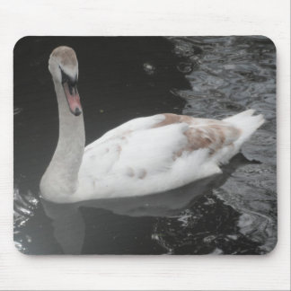 Mousepad Baby Swan Swimming