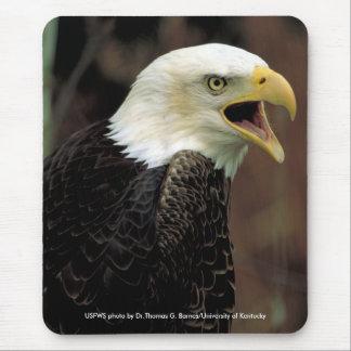 Mousepad / Bald Eagle