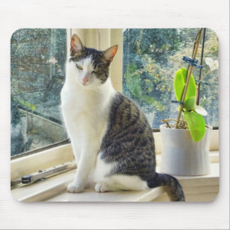 Mousepad - Beautyful cat on windowsill