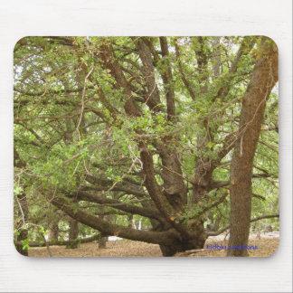 mousepad - big tree