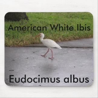 Mousepad blanco de la fauna del albus de Ibis Eudo Tapetes De Ratones