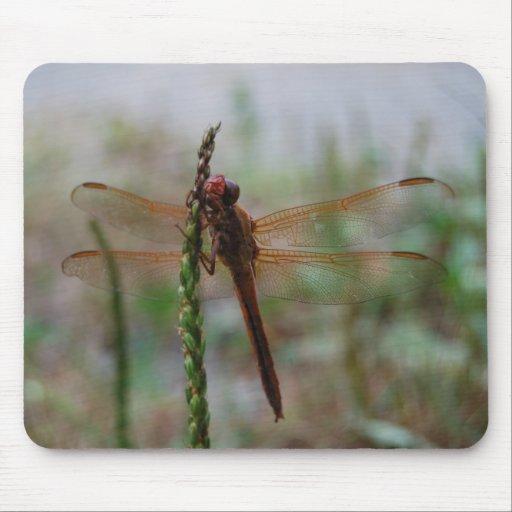 Mousepad cardinal de la libélula de Meadowhawk Tapetes De Ratones