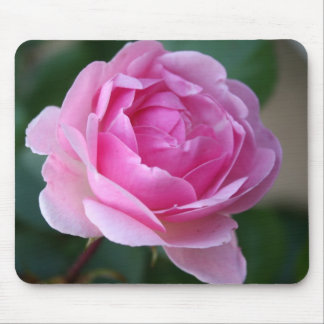 Mousepad color de rosa rosado solitario