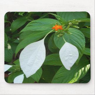 mousepad con hojas blanco misterioso de la planta