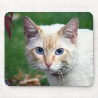 Mousepad de la cara del gato siamés