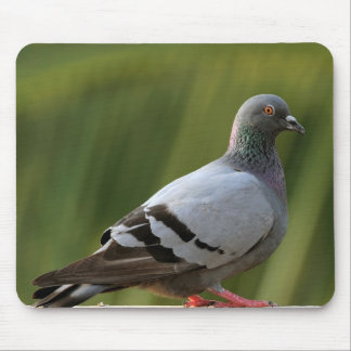 Mousepad de la paloma de roca