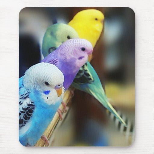 Mousepad de los Parakeets