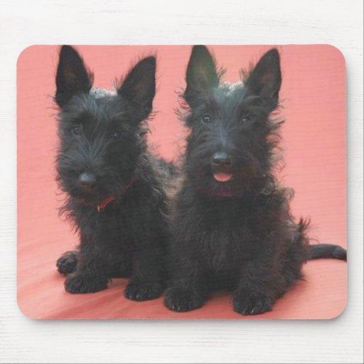 Mousepad de los perritos de Terrier del escocés