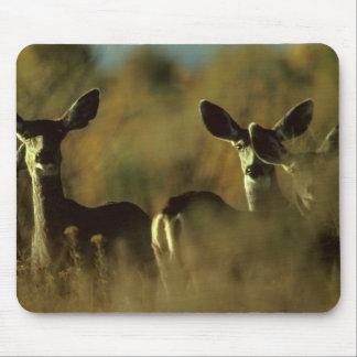 Mousepad / Deer / Mule Deer Herd