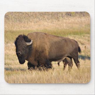 Mousepad del bisonte