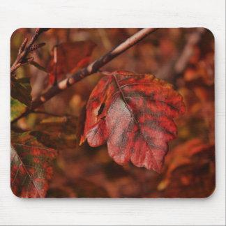Mousepad del color de la caída