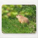 Mousepad del ~ de la marmota alfombrillas de raton