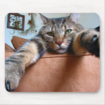 Mousepad del gato de Tabby Tapetes De Ratones
