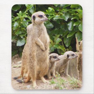 mousepad del meerkat