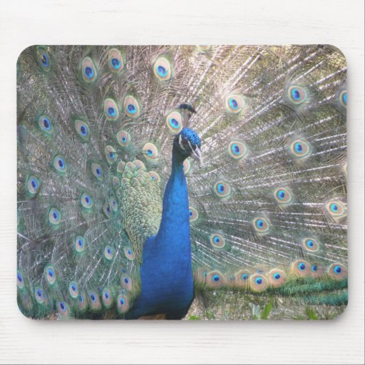 Mousepad del pavo real