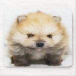 Mousepad del perrito de Pomeranian Tapetes De Ratón