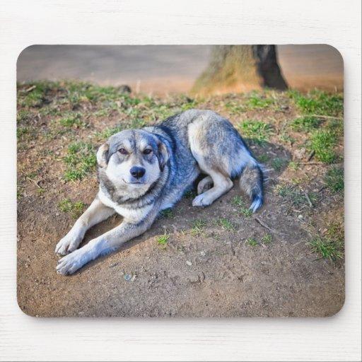 Mousepad del perro tapete de ratones