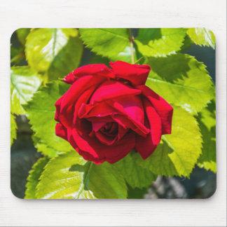 Mousepad del rosa rojo