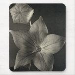 Mousepad floral blanco y negro tapetes de ratón