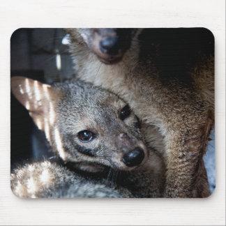 Mousepad Foxes