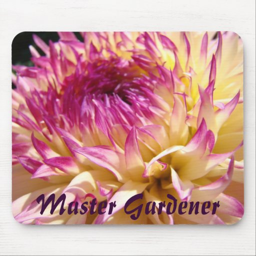 Mousepad grande de la flor de la dalia del jardine