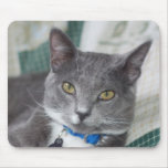 mousepad gris del gato de tabby alfombrilla de ratón