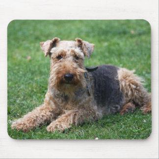 Mousepad hermoso de la foto del perro del terrier  alfombrillas de ratones