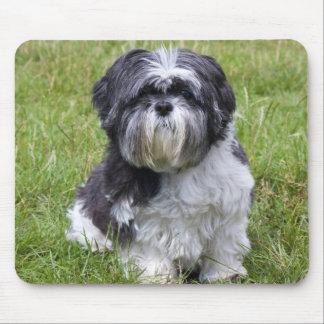 Mousepad hermoso lindo de la foto del perro de Shi