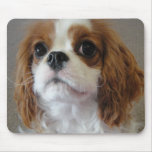 Mousepad lindo arrogante del perro de perrito de r tapetes de raton