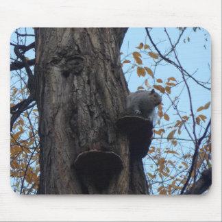 Mousepad Little Squirrel