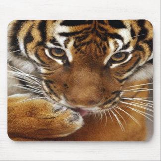 Mousepad malayo del tigre #1 tapetes de raton