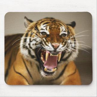 Mousepad malayo del tigre #2 tapete de ratones