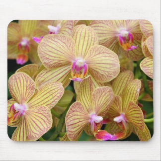 Mousepad - Moth Orchid