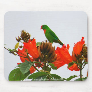 Mousepad-Parrot, green and orange Colasisi