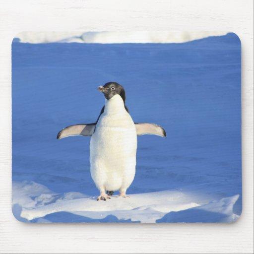 Mousepad - pingüino