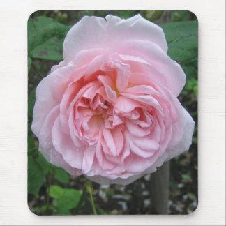 Mousepad: Pink Rose