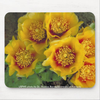 Mousepad / Prickly Pear Cactus